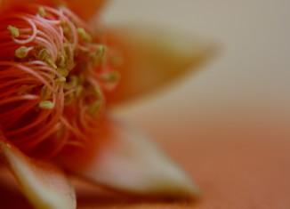 Las flores de granada