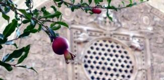 La granada o sea la manzana cartaginesa